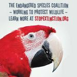photo of a green-winged macaw with a statement promoting Endangered Species Day and the Endangered Species Coalition 