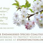 photo of tree blossom with a statement promoting Endangered Species Day and the Endangered Species Coalition