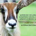photo of a roan antelope with a statement promoting Endangered Species Day and the Endangered Species Coalition