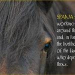 photo of a horse with a quote supporting the work of SPANA helping working animals