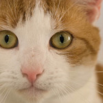 A close-up photo of a a cat looking at the camera