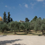 photo of olive trees and the Dome of the Rock on the Temple Mount in Jerusalem