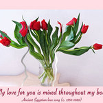 red tulips in a vase with a quote - My love for you is mixed throughout my body.