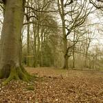 Slinden Wood, Sussex