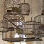 Birdcages In Udaipur