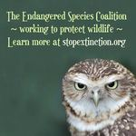 photo of a burrowing owl with a statement promoting Endangered Species Day and the Endangered Species Coalition