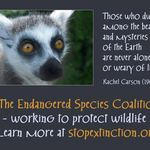 photo of a lemur with a statement promoting Endangered Species Day and the Endangered Species Coalition