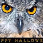 owl and 'Happy Halloween'