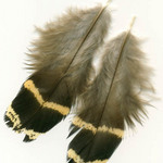 photo of brown and gold fireback bird feathers and down