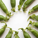 photo of peas in pods laid in a circle