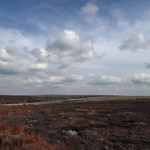 photo of heather on the Yorkshire moors with cloudy sky above