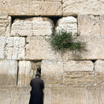 photo of a man in a black raincoat praying against the Western Wall in Jerusalem