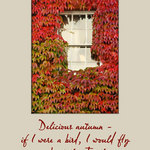 window in autumn with virginia creeper and a quote by George Eliot - Delicious autumn - if I were a bird, I would fly about the Earth seeking the successive autumns.